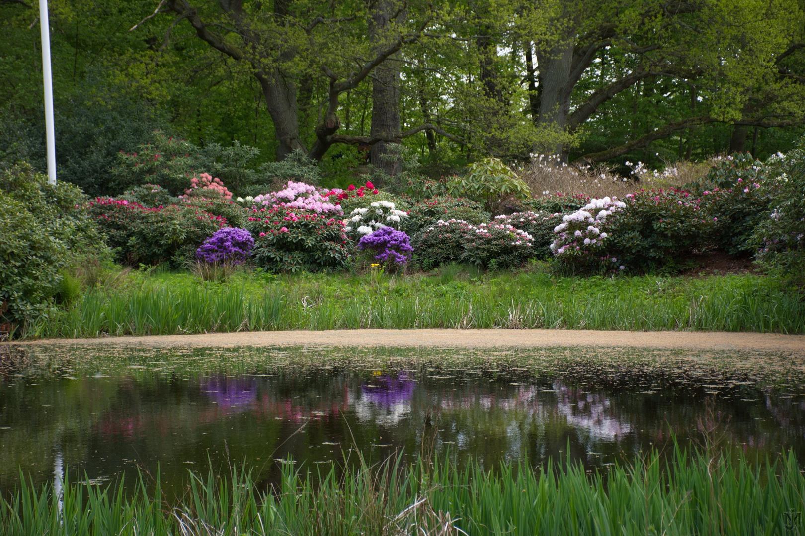 Nivågård 19 rhododendron_resize