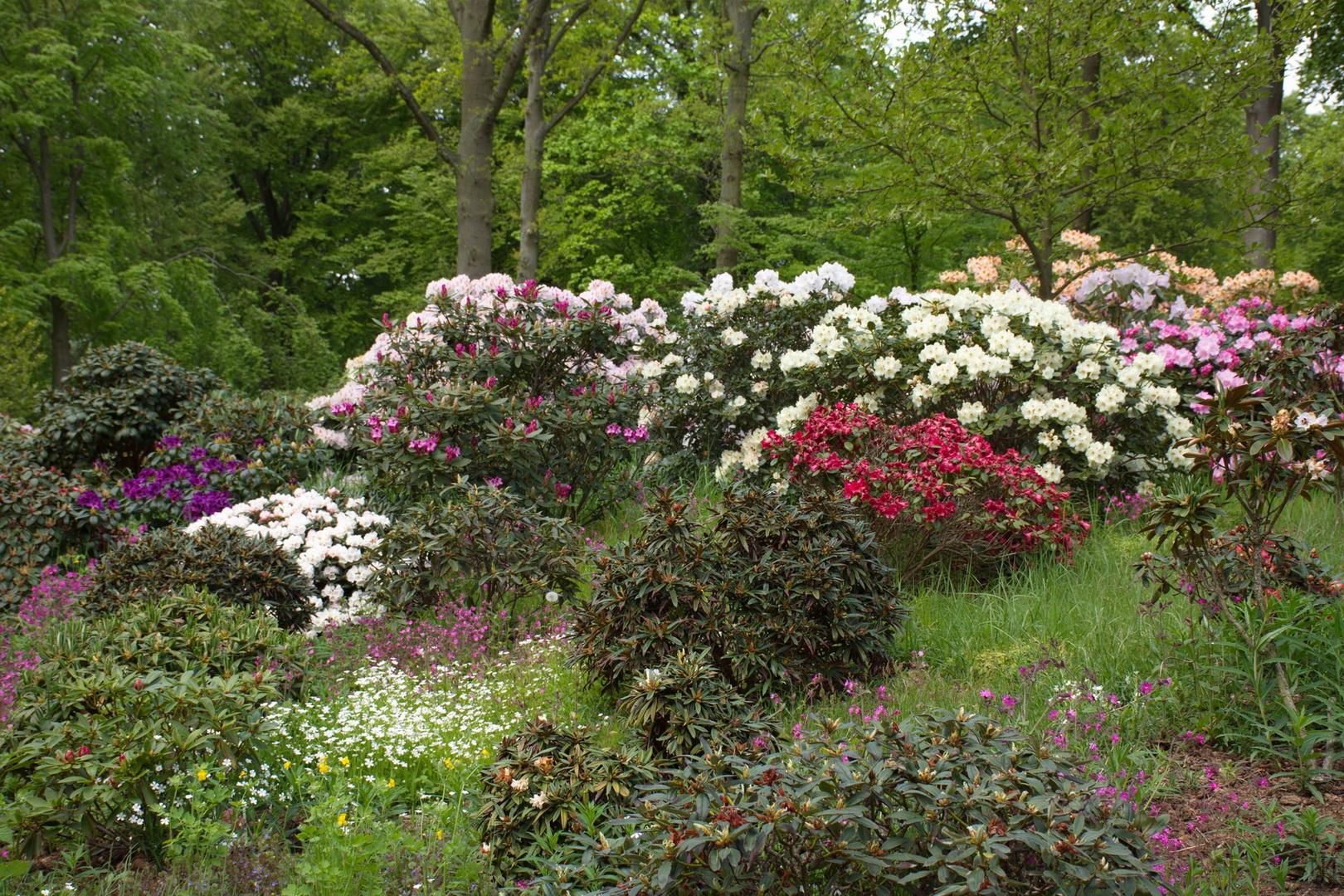 Nivågård 23 rhododendron_resize